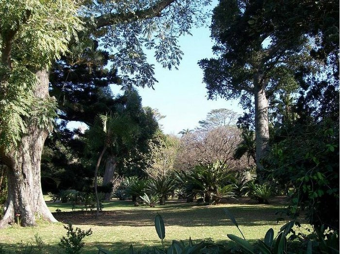 Durban Botanical cycad trees. By M. Purves (Creative Commons)