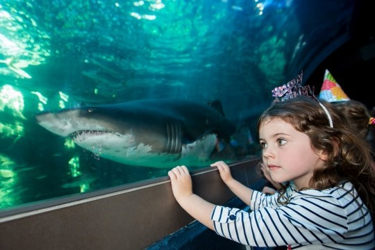 Winter Holiday Activities for you and your Kids in Cape ...