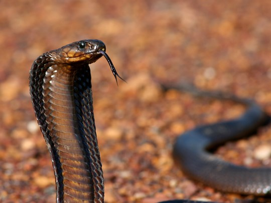 5 Venomous Snakes you may come across while Hiking in the