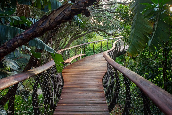 Kirstenbosch Gardens by Adam Harrower