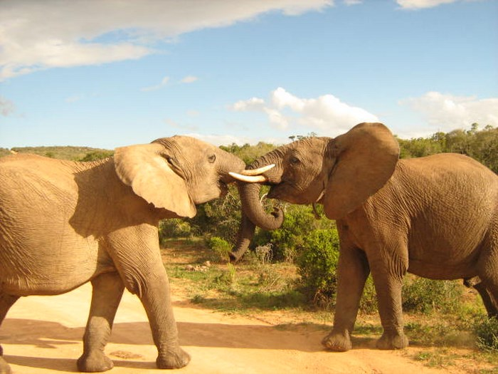 Addo Elephant Park by Addo Gateway Lodge (TravelGround)