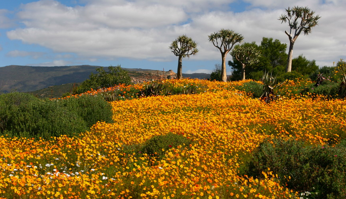 Namaqualand by Malcolm Manners (Flickr) 2