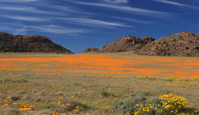Namaqualand by Malcolm Manners (Flickr)