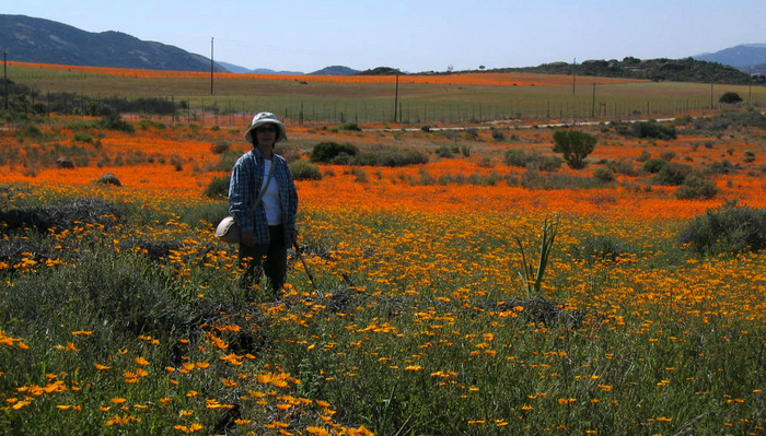Namaqualand by titoh44 (Flickr) 4