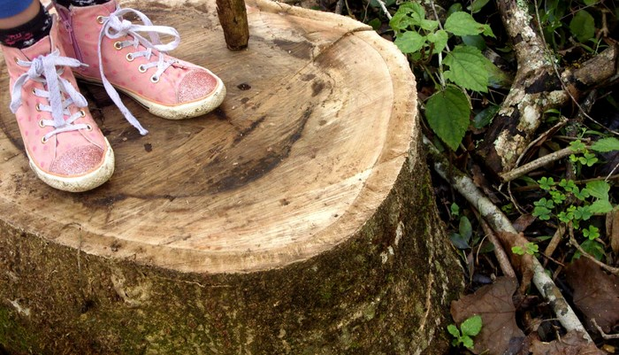 pink-shoes-tree-stump-by-Desiree-Haakonsen