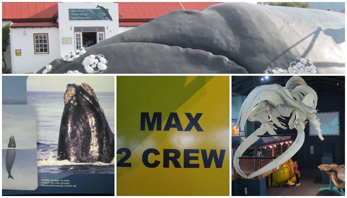 Whale House (C) Roseanna McBain
