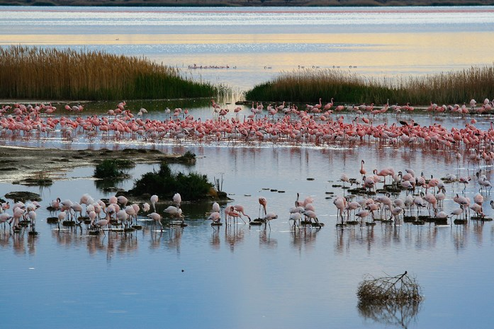 Flamingoes-Kimberley-By-Winston67(Flickr)