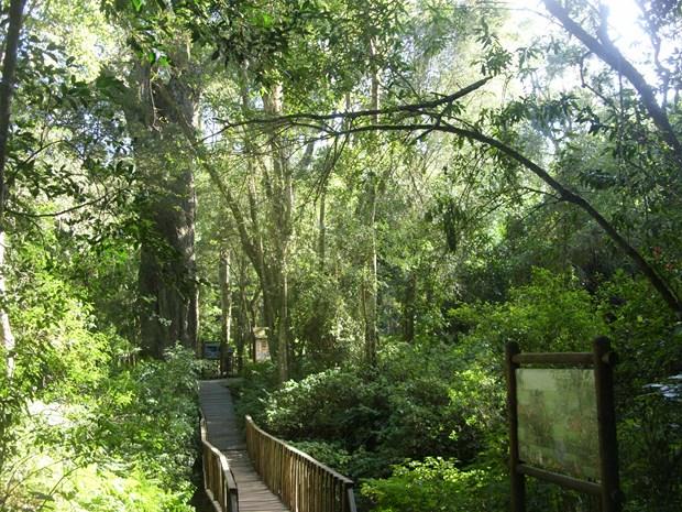 Wilderness Forest