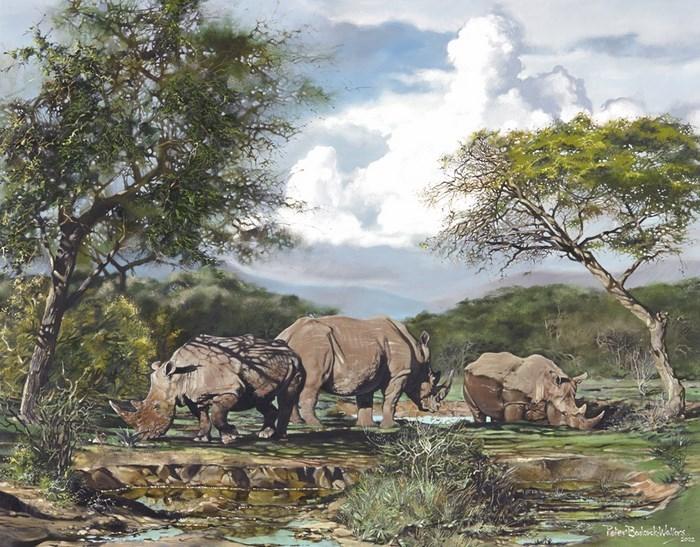 Peter Badcock-Walters Gallery Rhino's (C) Peter Badcock-Walters via Clarens News