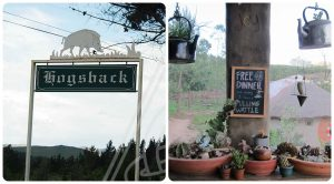 The entrance to Hogsback and a playful sign in a backpackers (Collage 1)