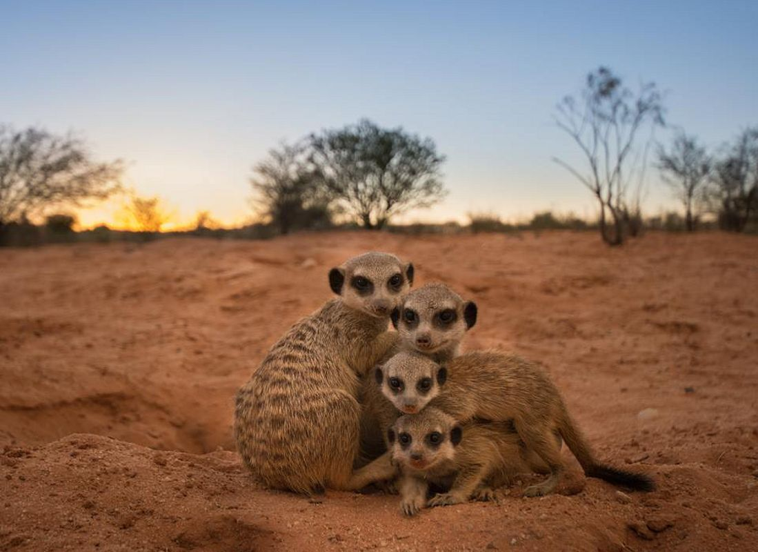 Kalahari Trails Nature Reserve and Meerkat Sanctuary
