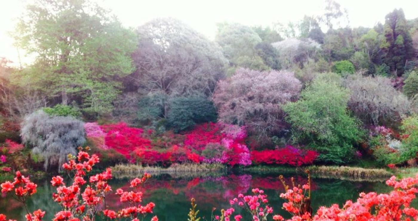 Magoebaskloof garden   Cheerio Gardens