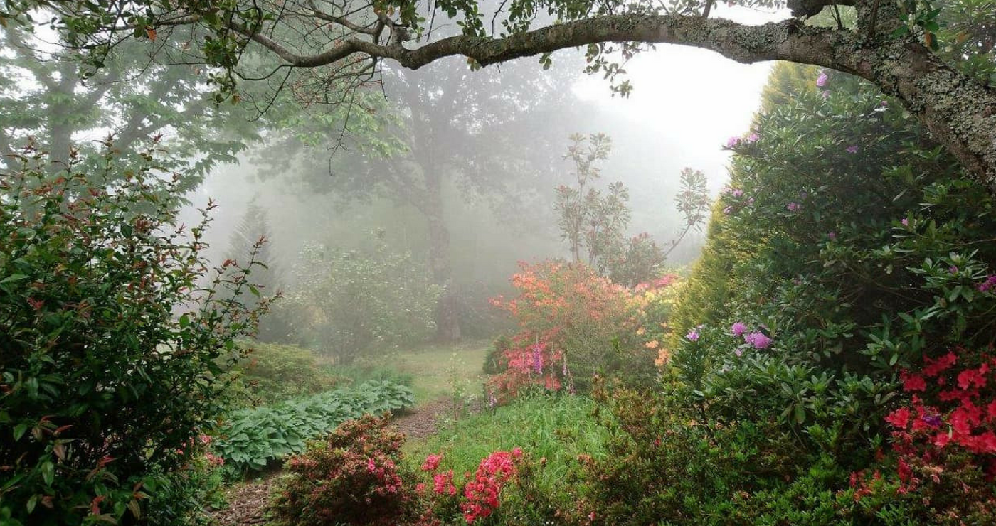 Hogsback garden | Granny Mouse House