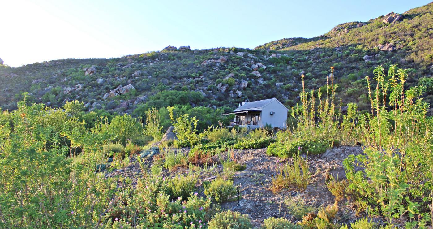 A chalet hiding behind a fynbos garden at Cederkloof.