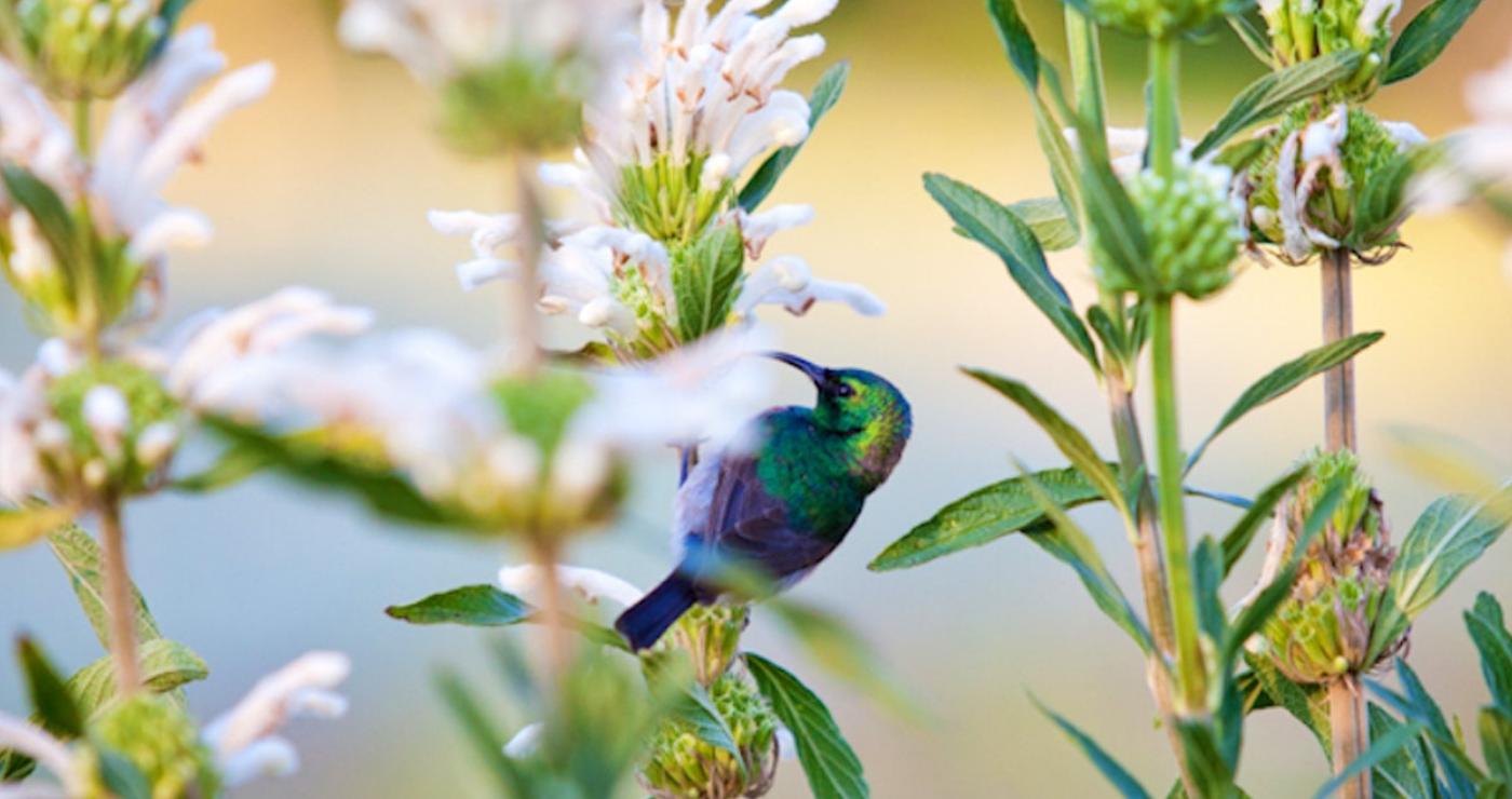 A happy bird at Cederkloof   Photo: TravelGround