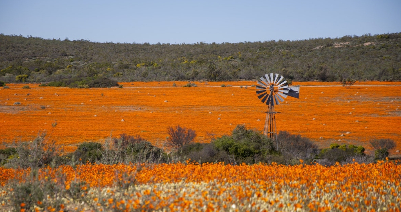 Windpomp in Namakwaland | Bron: Namaqua Flower Skilpad Camp.