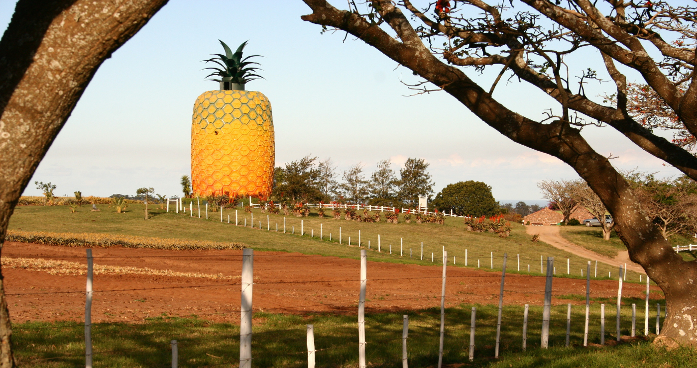 Die Groot Pynappel in Bathurst Lifesize Pineapple Big