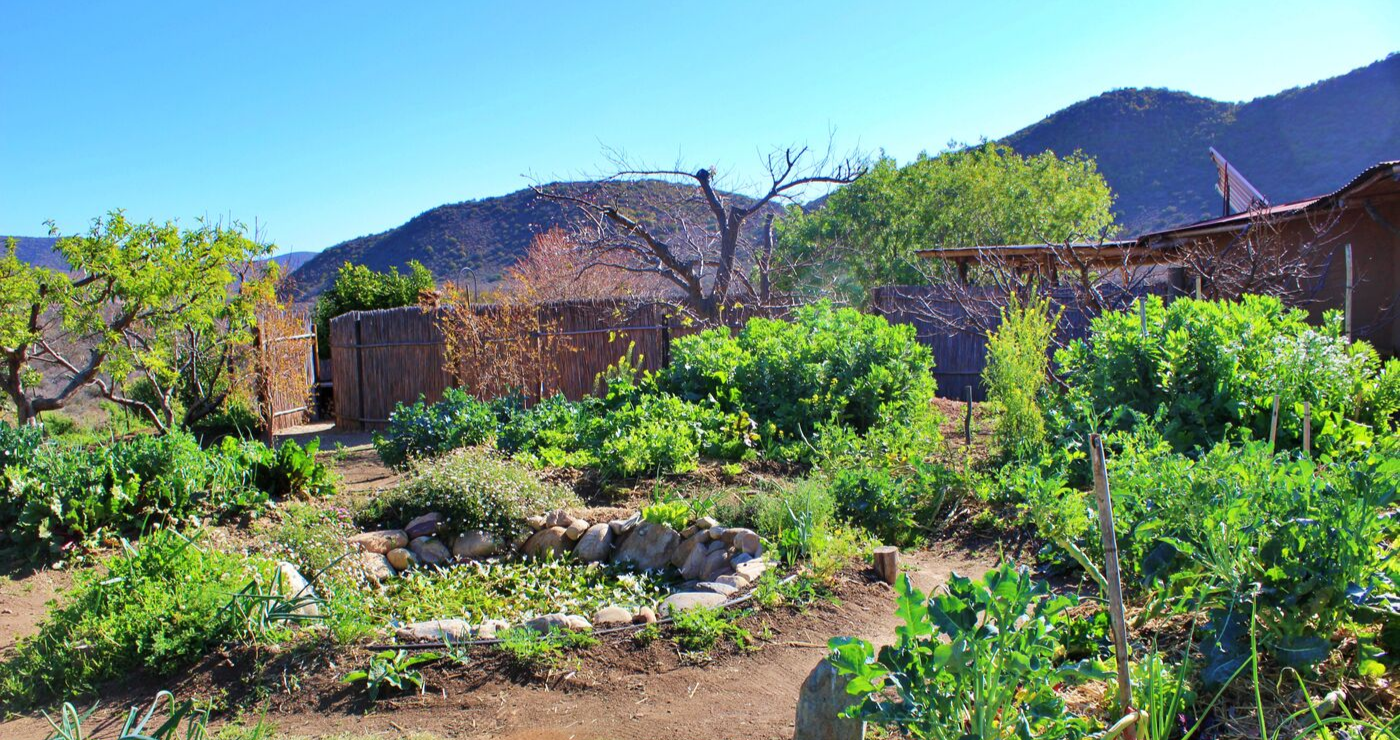 The permaculture garden at Numbi.