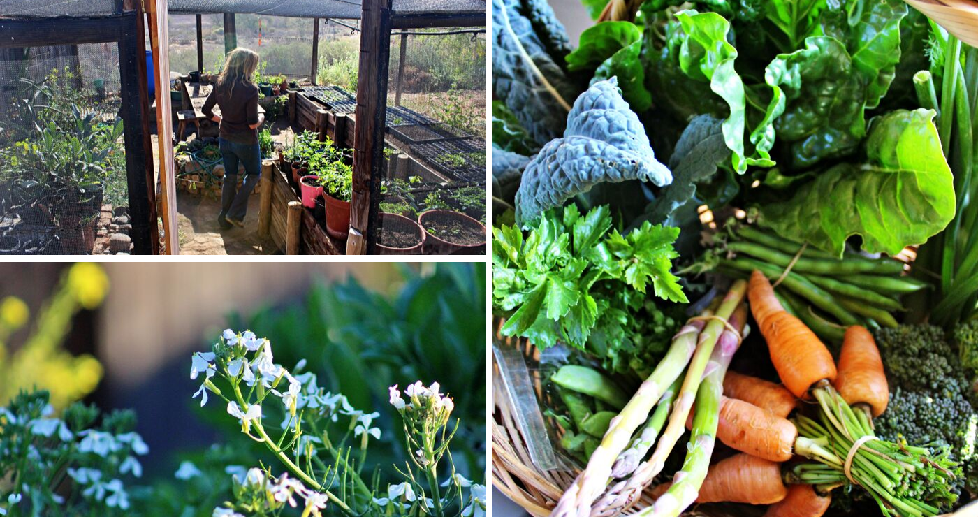 Kathryn in her greenhouse. | The basket of vegetables from the garden we ordered.