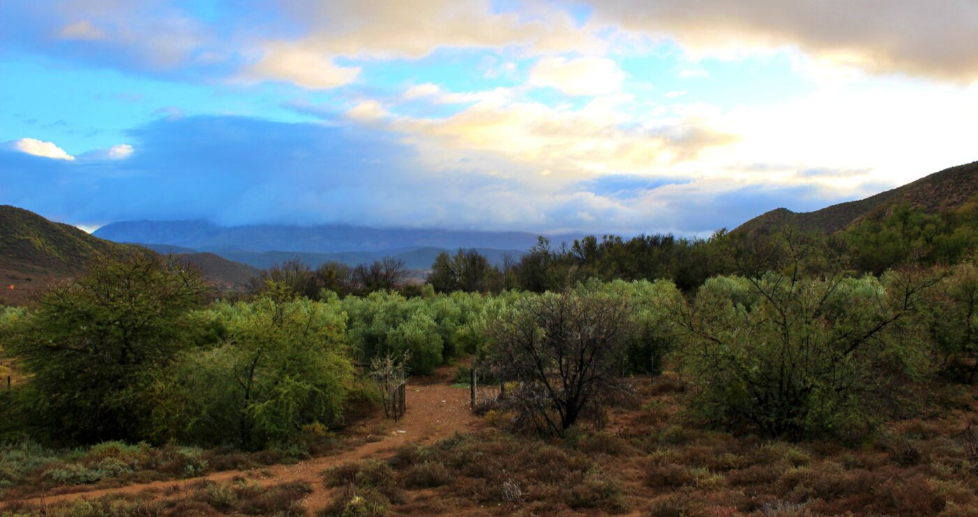 The olive plantation is visible from the cottage.
