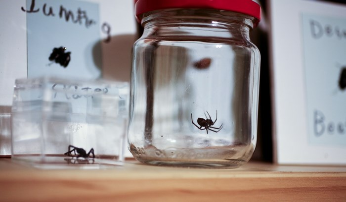 Spider jar by ssicore (Flickr)