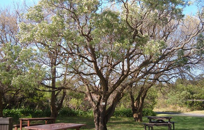 Picnic area supplied by Fernkloof Nature Reserve