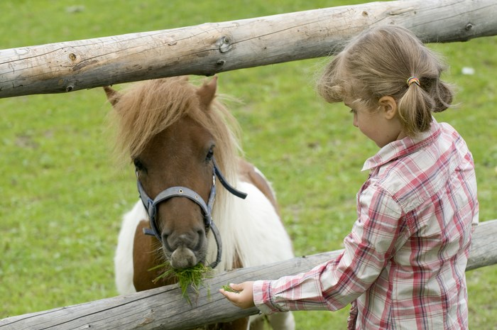 Little girl feeding pony