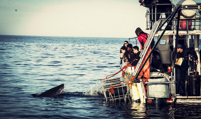 Shark cage diving supplied by White Shark Projects
