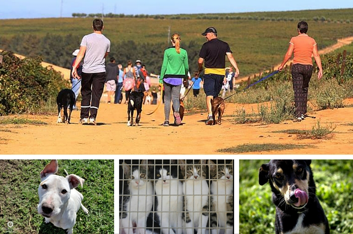 Make a difference by volunteering at a shelter or join a BrakTrap, like the one at AWSS. Photo: Animal Welfare Society Stellenbosch